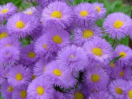 بالصور صور زهور , اجمل الورود 1589 7