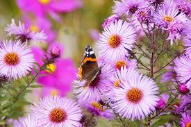 بالصور صور زهور , اجمل الورود 1589 8