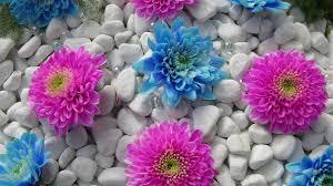 بالصور صور زهور , اجمل الورود 1589 9