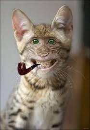بالصور صور مضحكة عن الحيوانات , صوره مضحكه للحيونات 1590 7