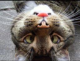 بالصور صور مضحكة عن الحيوانات , صوره مضحكه للحيونات 1590 9