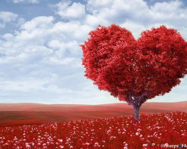 بالصور صور قلب حب , قلوب واجمل الصور الرومانسية 1598 5