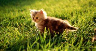 بالصور صور صغار الحيوانات , احلى صور الحيونات 1635 10 310x165
