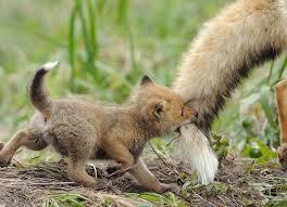 بالصور صور صغار الحيوانات , احلى صور الحيونات 1635 3