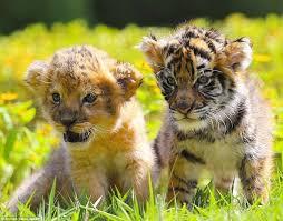 بالصور صور صغار الحيوانات , احلى صور الحيونات 1635 4