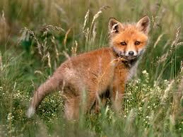 بالصور صور صغار الحيوانات , احلى صور الحيونات 1635 5