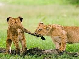 بالصور صور صغار الحيوانات , احلى صور الحيونات 1635 6