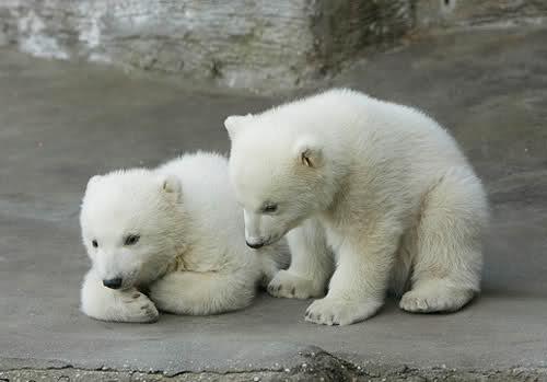 بالصور صور صغار الحيوانات , احلى صور الحيونات 1635 8