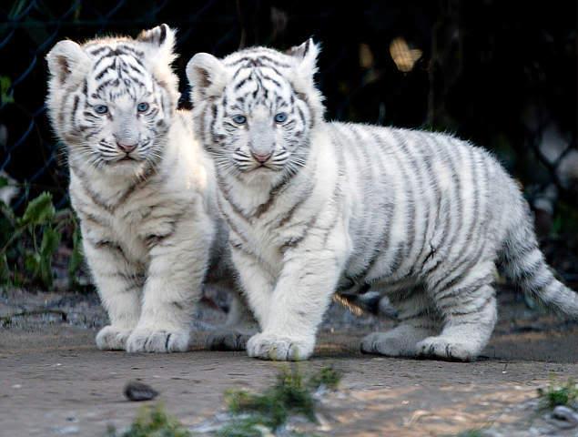 بالصور صور صغار الحيوانات , احلى صور الحيونات 1635 9