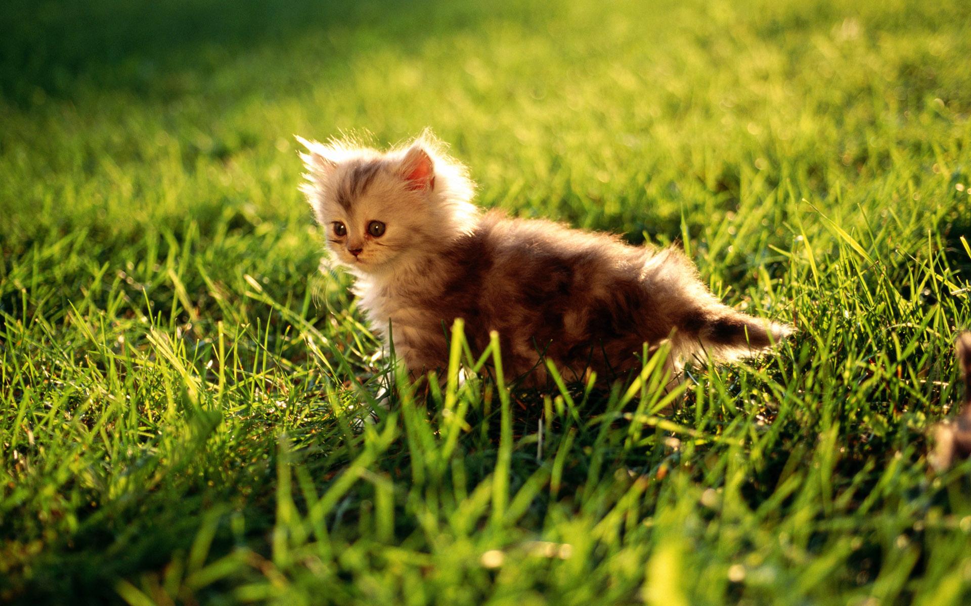 بالصور صور صغار الحيوانات , احلى صور الحيونات 1635
