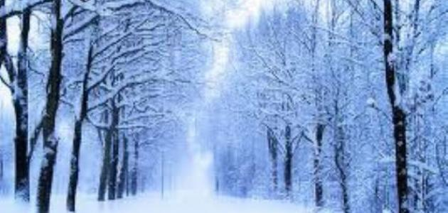 بالصور صور عن فصل الشتاء , روائع الشتاء 1638 6