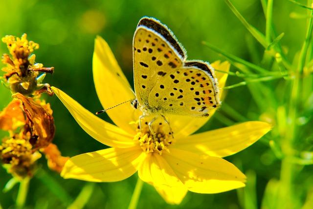 بالصور صور فراشات , اجمل الفراشات بالصور 1655 14