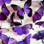 صور فراشات , اجمل الفراشات بالصور