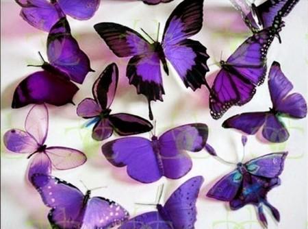 بالصور صور فراشات , اجمل الفراشات بالصور 1655 5