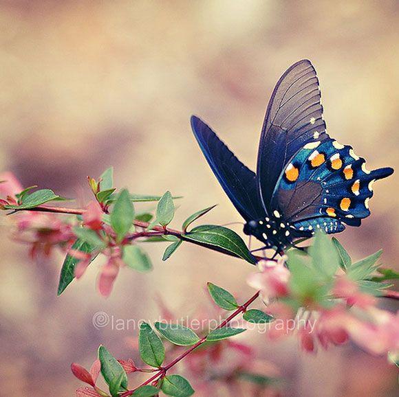 صوره صور فراشات , اجمل الفراشات بالصور