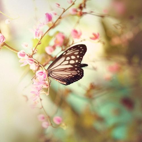 بالصور صور فراشات , اجمل الفراشات بالصور 1655 7
