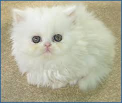 صوره صور قطط روعه , صورة اروع قطة في العالم