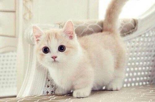 صور صور قطط روعه , صورة اروع قطة في العالم
