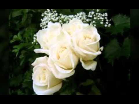 بالصور صور عن الورد , اجمل صورة لاروع زهرة 1806 2