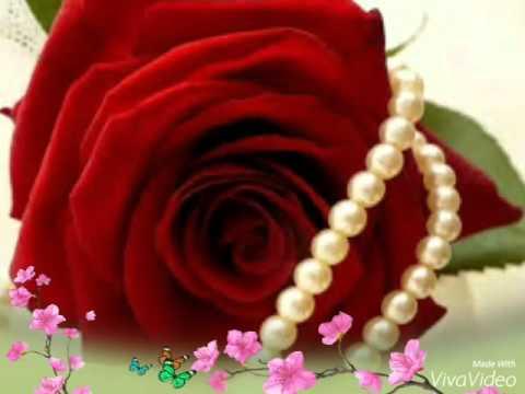 بالصور صور عن الورد , اجمل صورة لاروع زهرة 1806 4