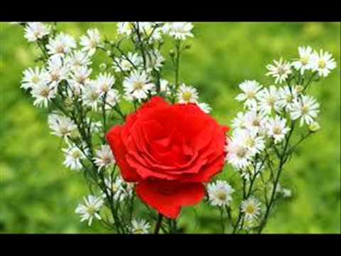 بالصور صور عن الورد , اجمل صورة لاروع زهرة 1806 8