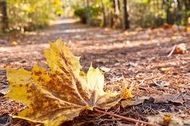 بالصور صور عن الخريف , من اجمل الفصول 1869 4