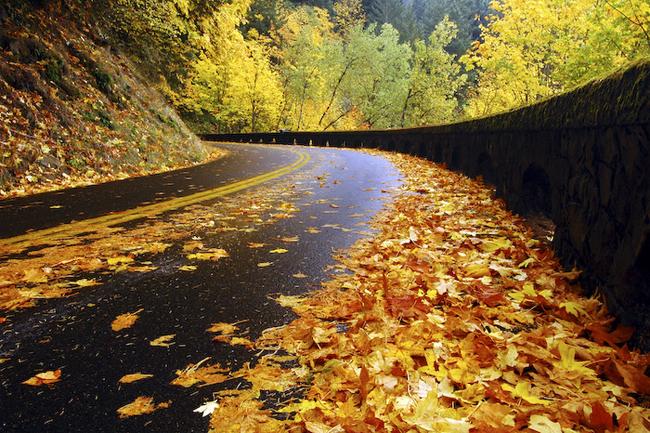 بالصور صور عن الخريف , من اجمل الفصول 1869 5