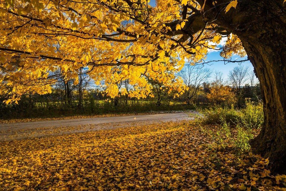 بالصور صور عن الخريف , من اجمل الفصول 1869 6
