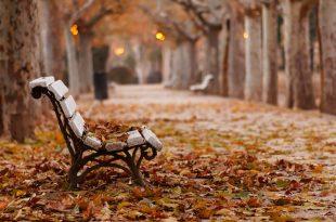 صوره صور عن الخريف , من اجمل الفصول