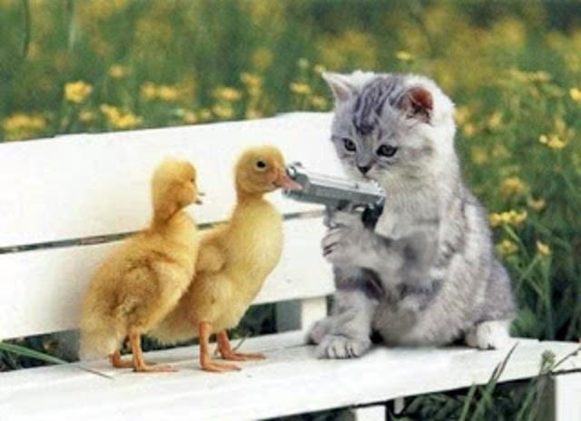 صوره صور مضحكة للحيوانات , حيوان مضحك