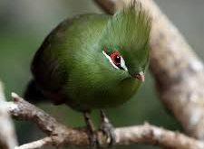 صورة صور طيور نادرة , احلى واجمل الطيور