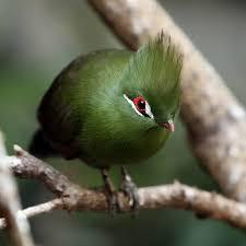 صور طيور نادرة , احلى واجمل الطيور