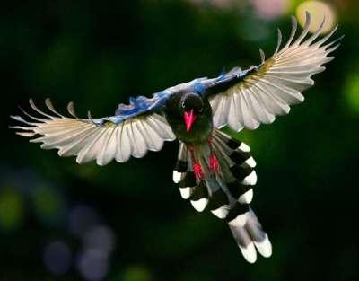 بالصور صور طيور نادرة , احلى واجمل الطيور 1941 4