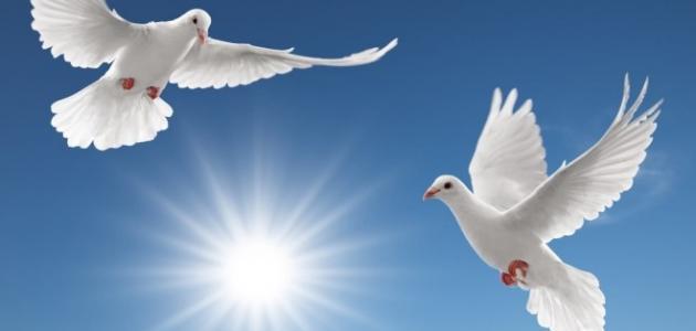 صوره صور عن السلام , كلمات عن السلم والامان