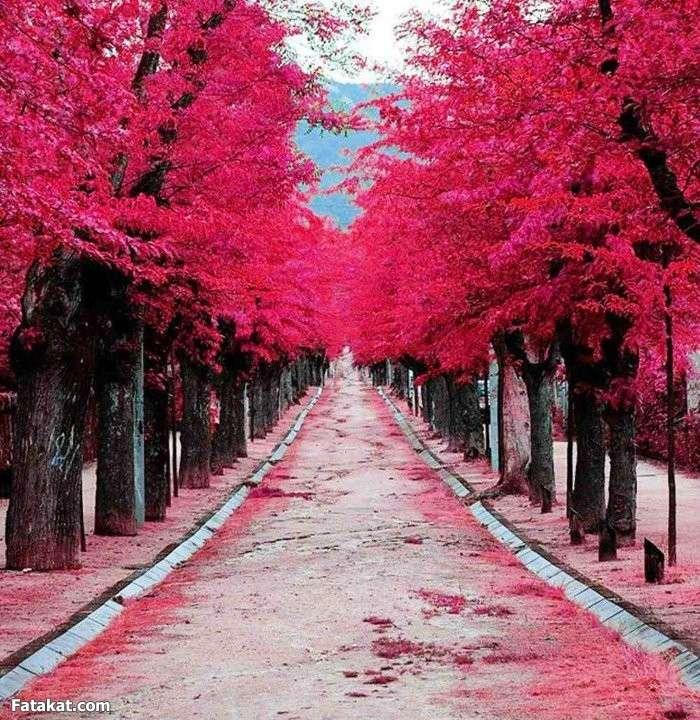 بالصور صور جميلة جدا , اروع الصور الجميله 1999 5
