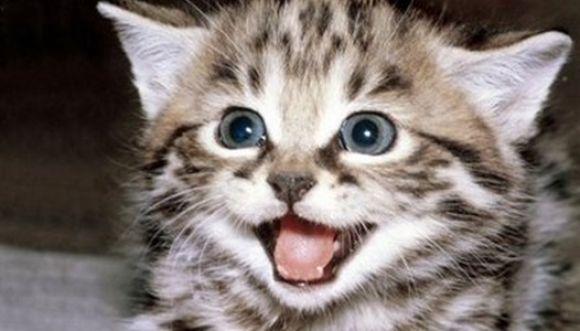 بالصور صور اجمل قطط , شكل جميل للقطط 2016 1
