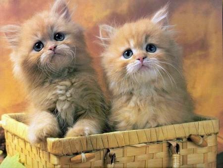 بالصور صور اجمل قطط , شكل جميل للقطط 2016 3