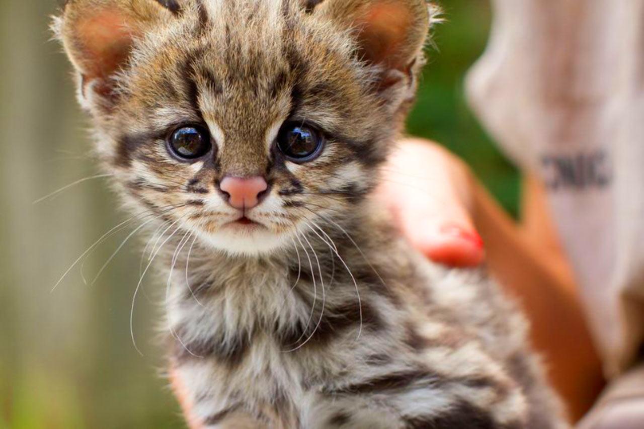 بالصور صور اجمل قطط , شكل جميل للقطط 2016 4