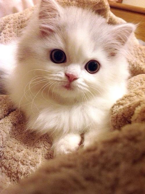 بالصور صور اجمل قطط , شكل جميل للقطط 2016 6