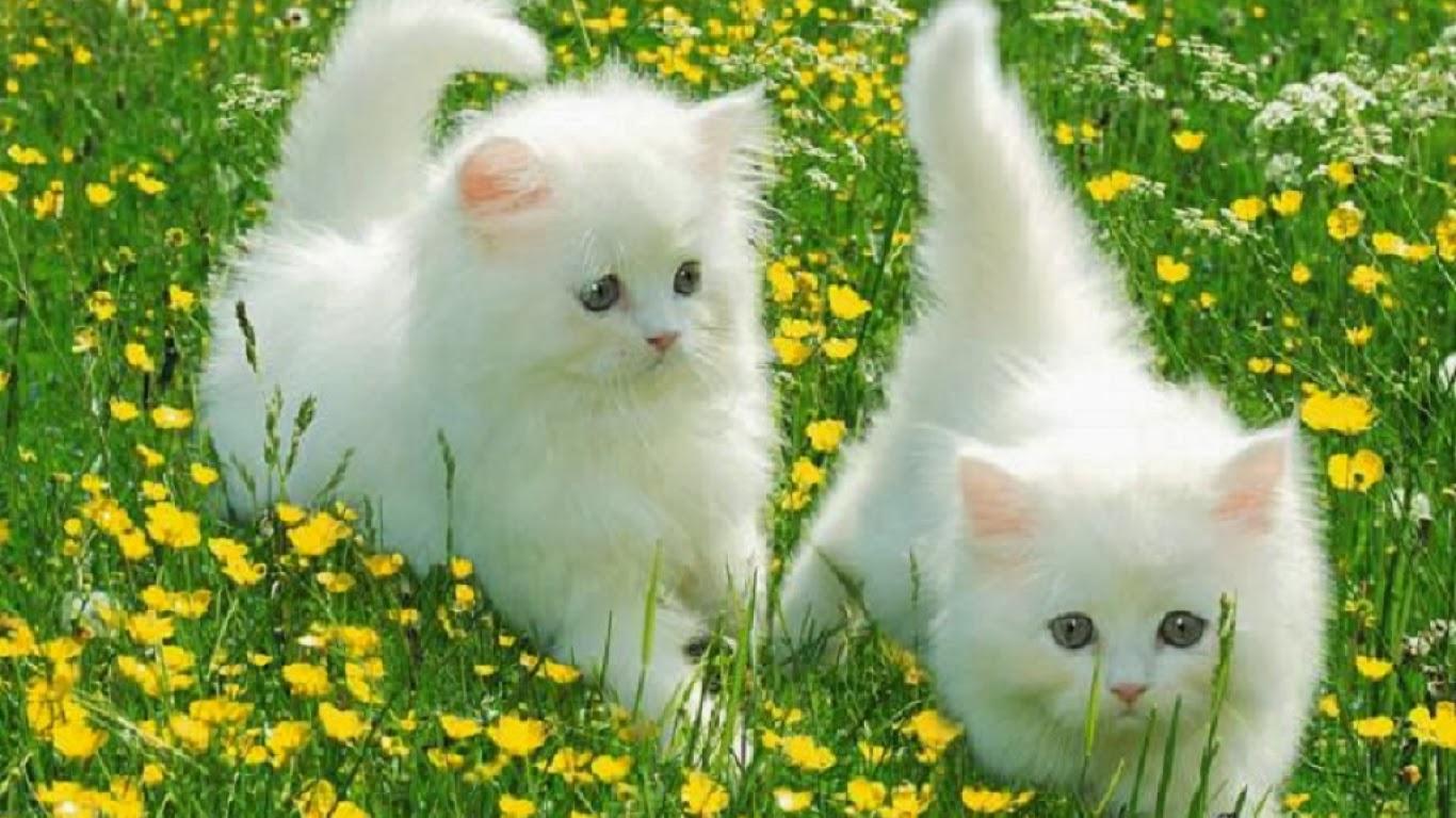بالصور صور اجمل قطط , شكل جميل للقطط 2016 8