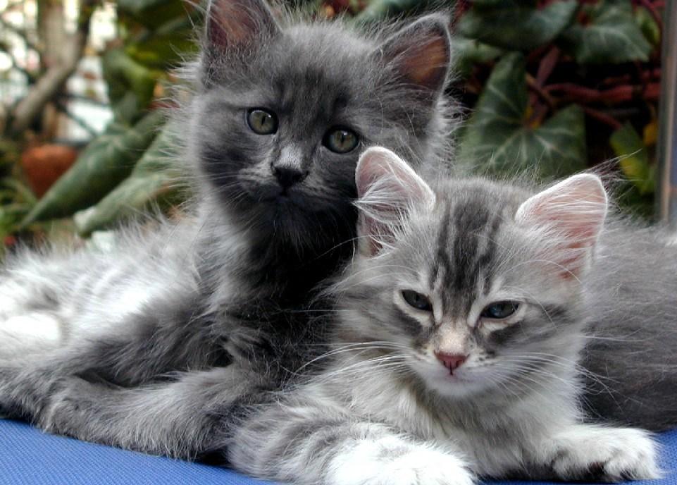 بالصور صور اجمل قطط , شكل جميل للقطط 2016