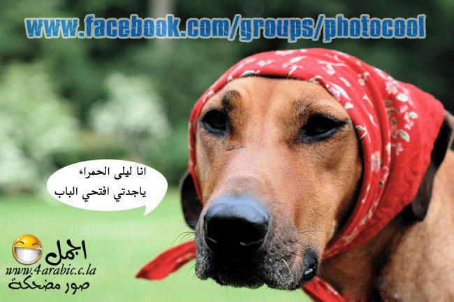 بالصور صور مضحكة جدا , صور مضحكة احلى صور مضحكه 3707 4