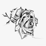 صور رسم الورد بالرصاص , صور ورد بالقلم الرصاص