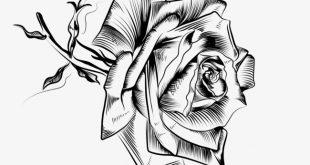 صوره صور رسم الورد بالرصاص , صور ورد بالقلم الرصاص
