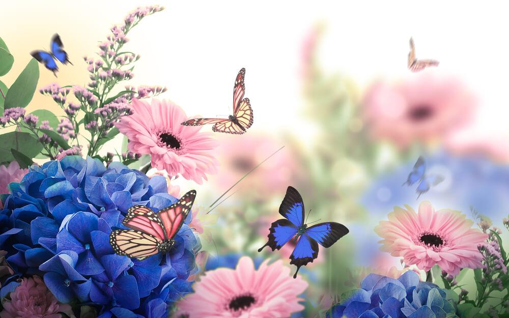 بالصور صور زهور اجمل صور زهور زهور جميلة , خلفيات رومانسية للورود حلوة 3774 1