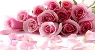 صور زهور اجمل صور زهور زهور جميلة , خلفيات رومانسية للورود حلوة