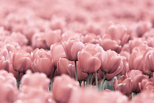 بالصور صور زهور اجمل صور زهور زهور جميلة , خلفيات رومانسية للورود حلوة 3774 2