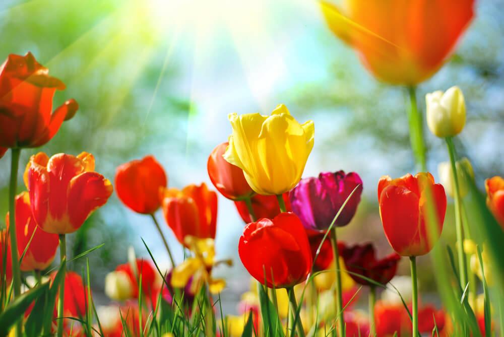 بالصور صور زهور اجمل صور زهور زهور جميلة , خلفيات رومانسية للورود حلوة 3774 4