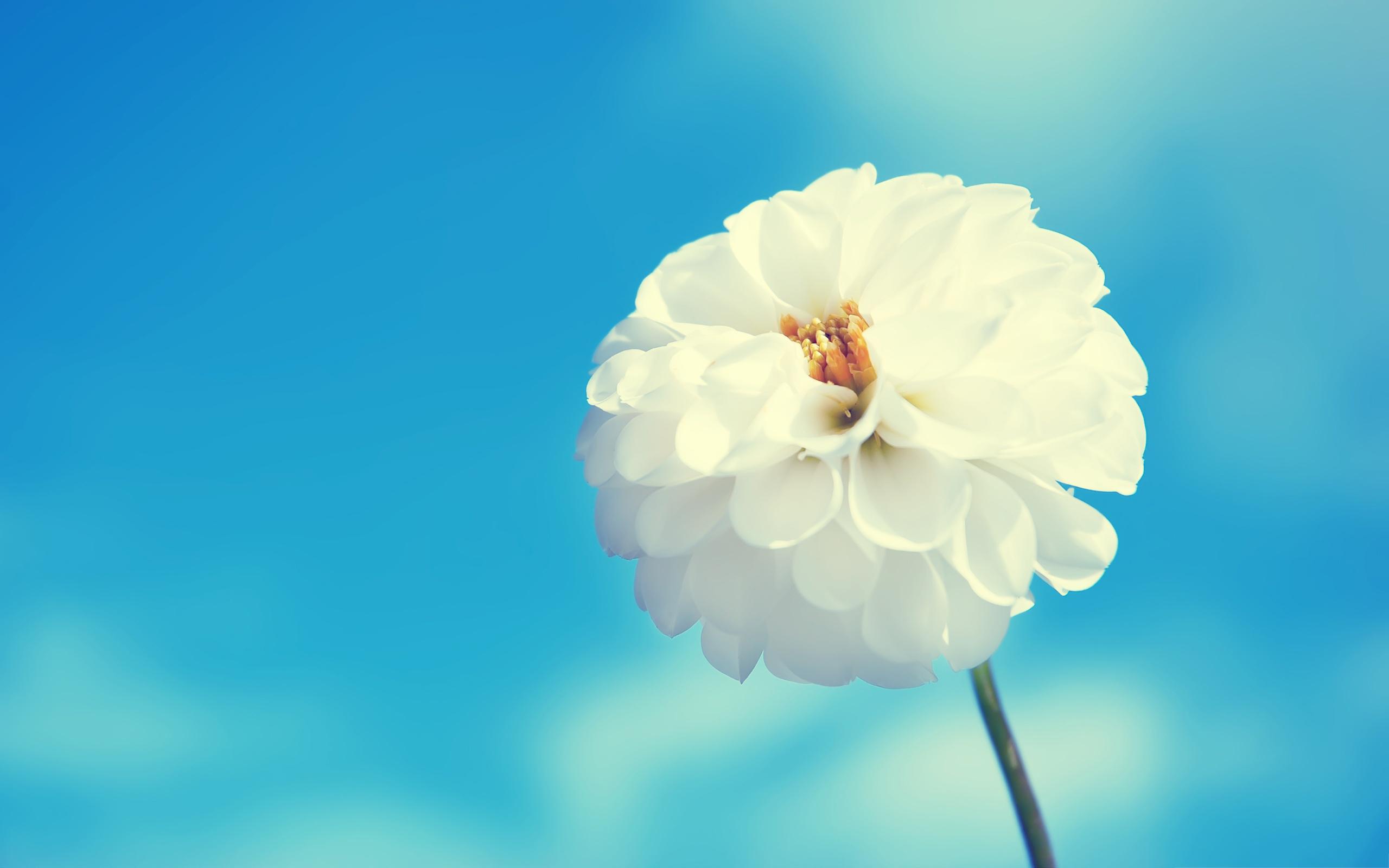 بالصور صور زهور اجمل صور زهور زهور جميلة , خلفيات رومانسية للورود حلوة 3774 7