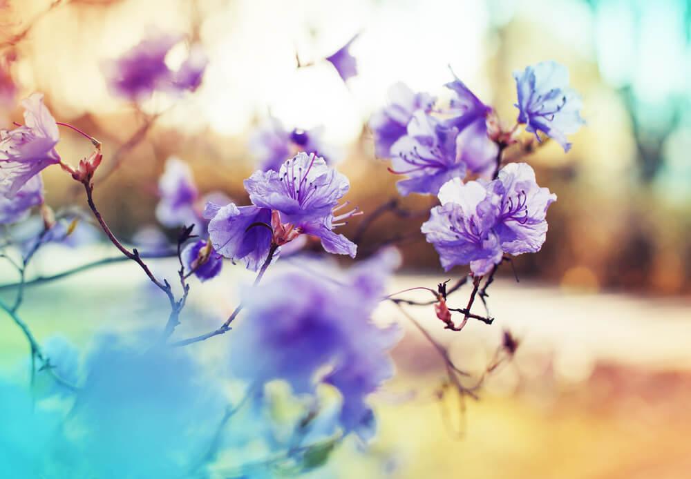 بالصور صور زهور اجمل صور زهور زهور جميلة , خلفيات رومانسية للورود حلوة 3774 9